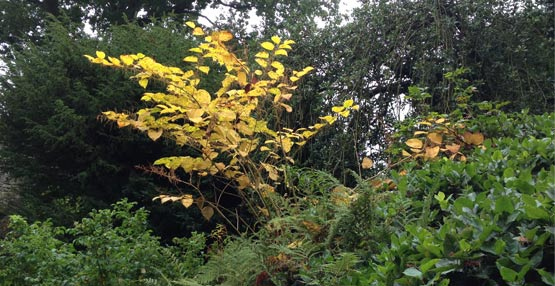 nationwide commercial and residential japanese knotweed removal