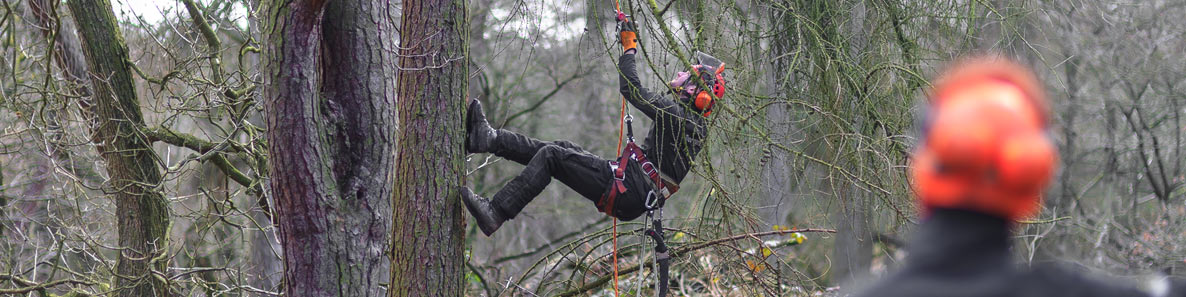 local tree surgery services in Staffordshire can involve climbing trees