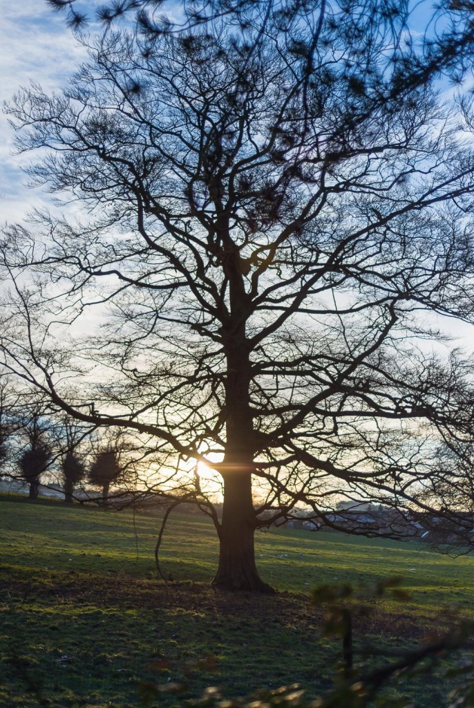 all types of tree pruning including fruit trees and hedges