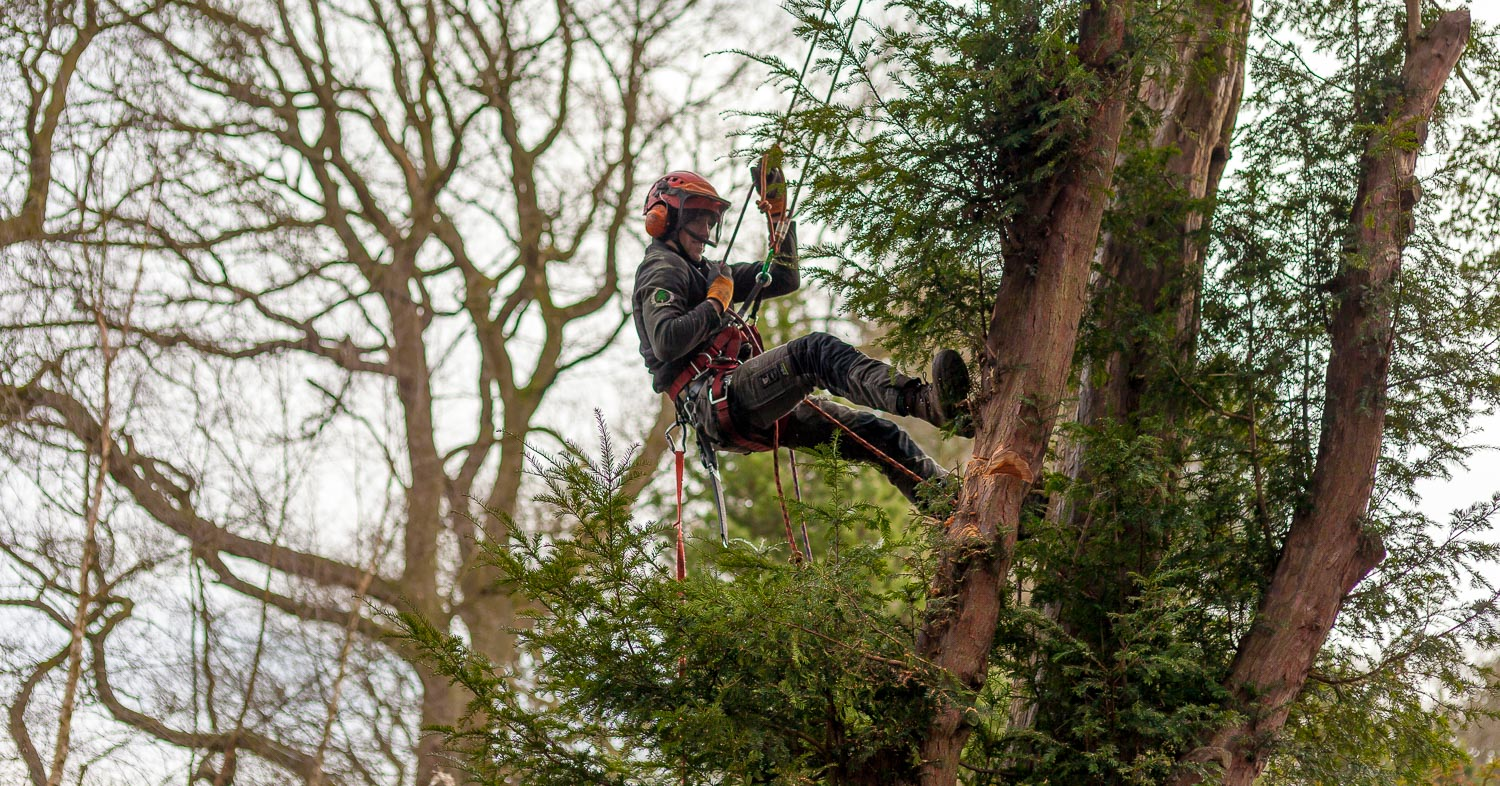 local tree felling services in Staffordshire can sometimes involve climbing trees