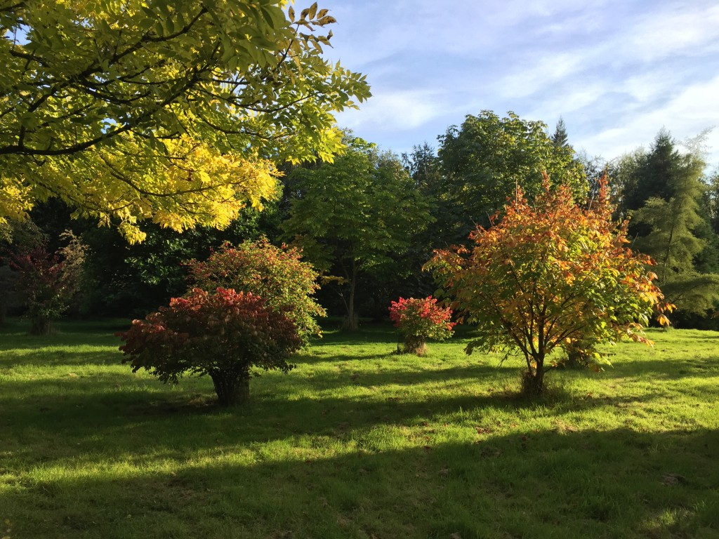 Planting trees for autumn colour tree heritage - Planting fruit trees in autumn ...