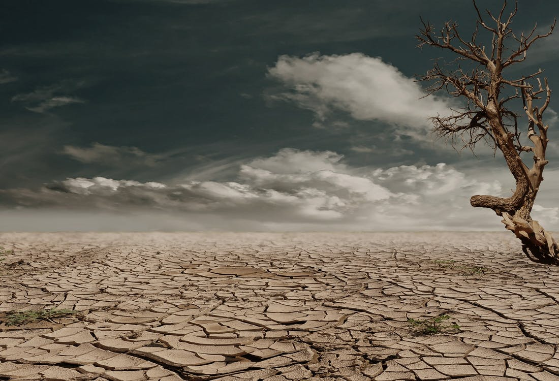 dead-tree-under-drought-conditions
