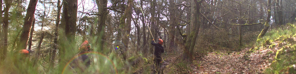 Safety-survey-being-carried-out-in-local-woodland-by-the-team