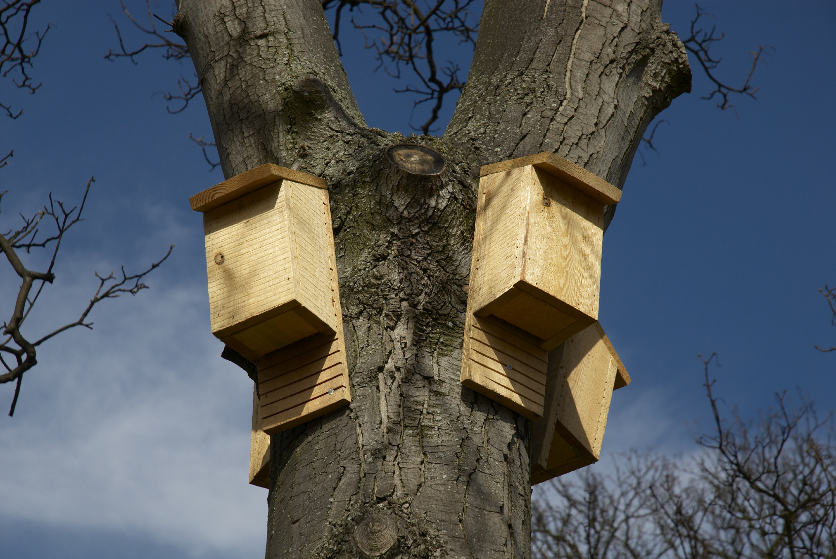 Bat-boxes-installed-in-a-tree-to-benefit-the-ecology-of-the-area.