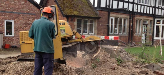 local stump removal services in Staffordshire