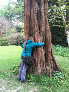 Leslie hugging a tree at Bodnant Garden
