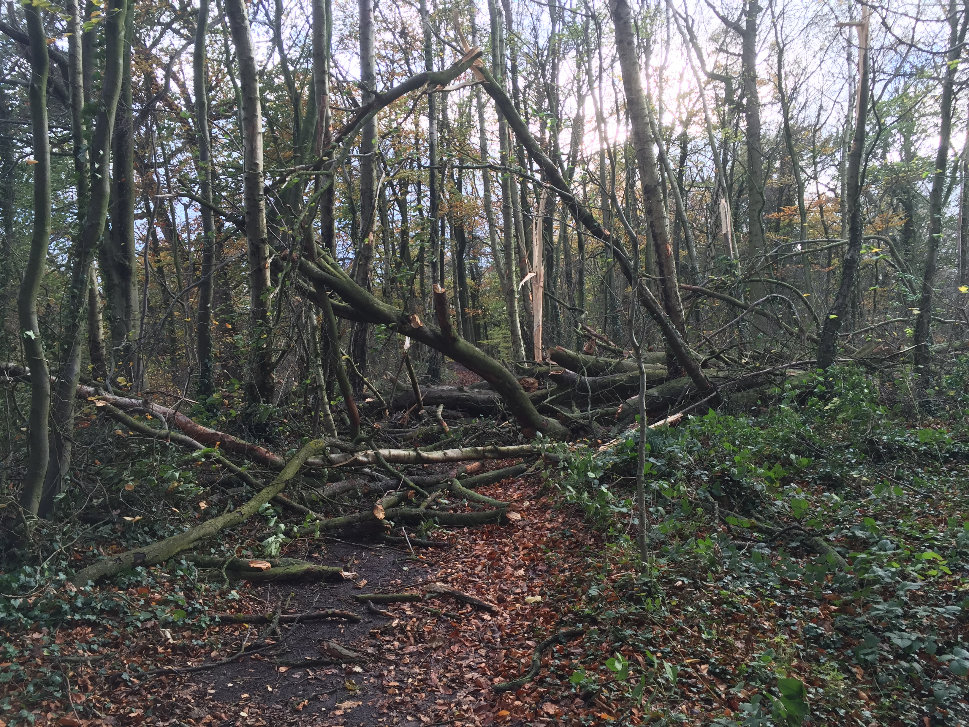 Tree-branches-on-the-woodland-floor-after-a-storm