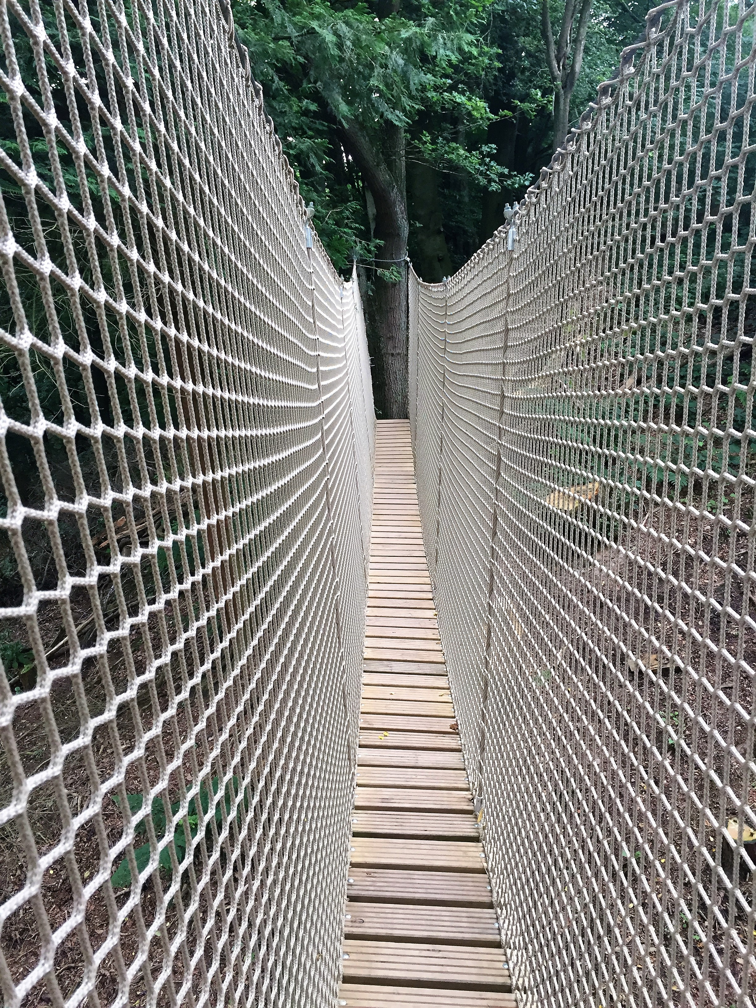 tree-safety-survey-ensures-canopy-walkway-is-safe