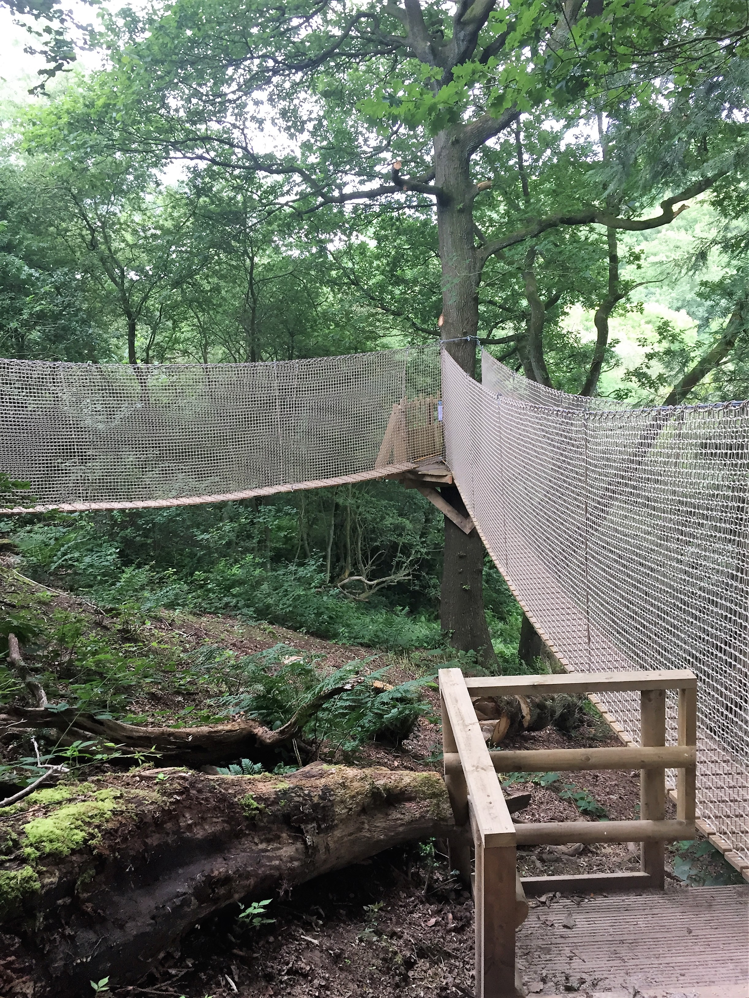 safely-installed-walkway-after-tree-safety-survey