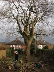 Tree Heritage safely removing a garden tree