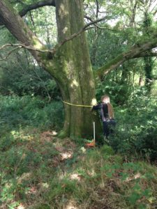 Tree Heritage measuring a tree during a survey